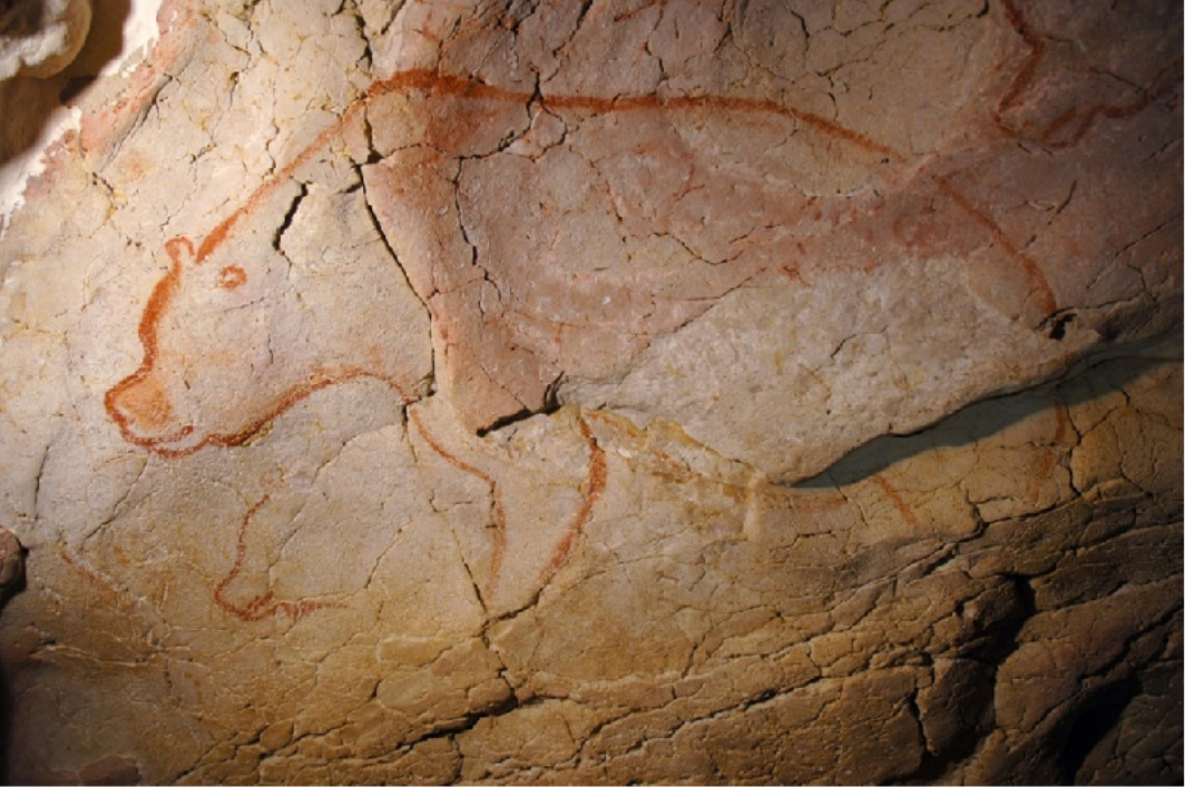 Image of wall art depicting a bear discovered in la Grotte Chauvet-Pont d'Arc