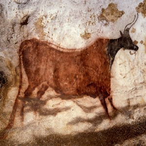 Image of wall art depicting a cow found in La Grotte de Lascaux