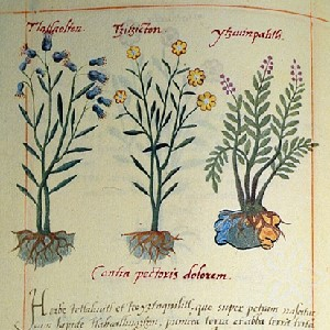 Page from The Badianus Codex, an Aztec book of herbal medicine showing several plants.