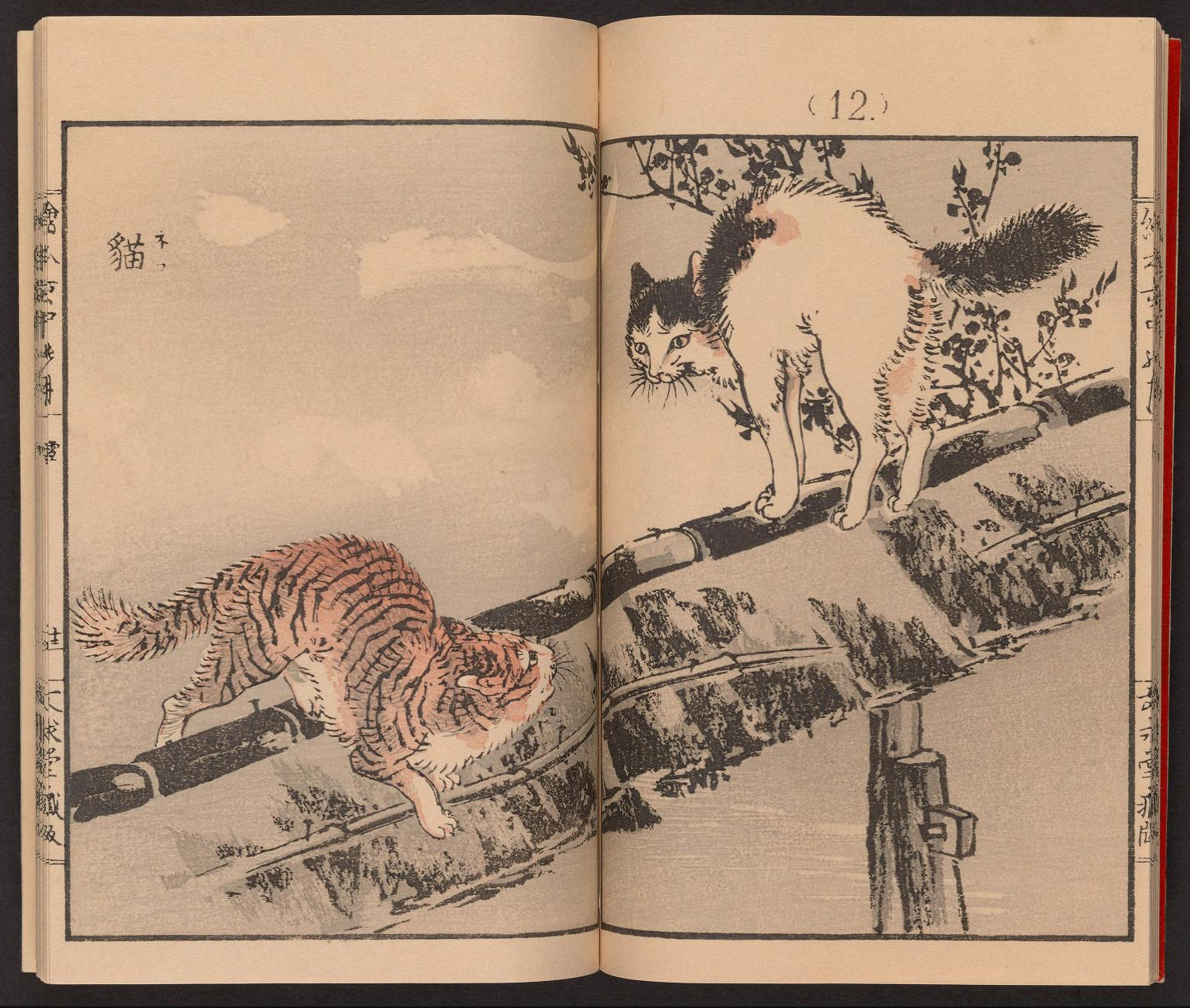 Two pages showing a white and black cat alarmed by a calico cat on a rooftop. from artist Kōno Bairei's 1889 publication, Inaka no tsuki. This volume includes color woodcut prints of animals, birds, fishes, plants, and trees.