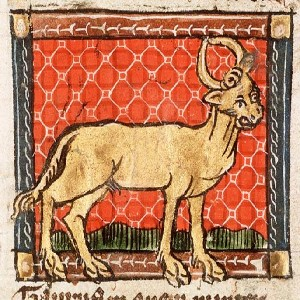 Image of a cow against a red backdrop from The Hague