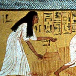 Detail from a tomb painting showing a woman in a white dress gathering the harvest