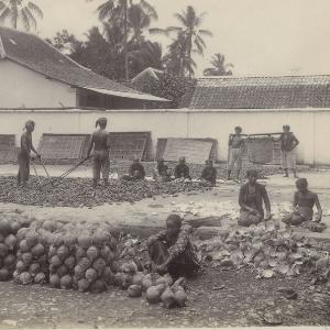 Men and women prepare copra in the Dutch East Indies