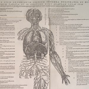 Detail of a page from Andreas Vealius' book Bruxellensis showing a map of major arteries