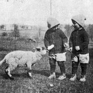 thumbnail of an orphan children feeding a goat